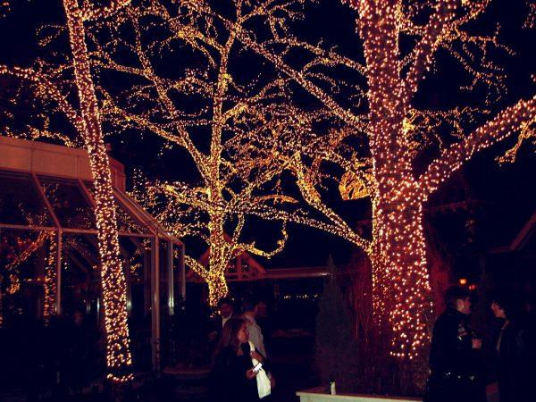 Christmas Lights Trees NYC