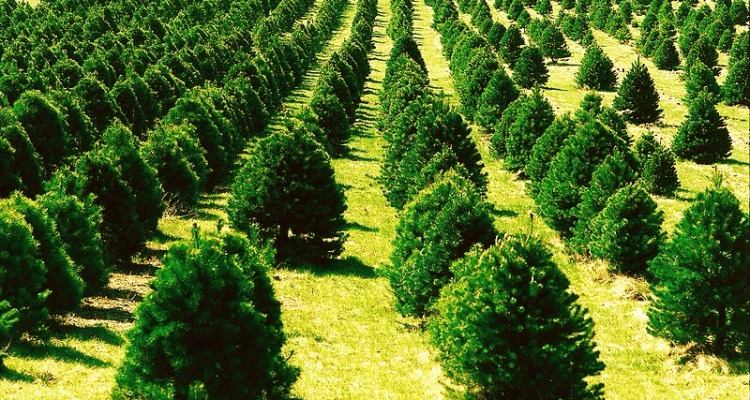 Christmas Tree Miracle Producer Followed Her Dreams