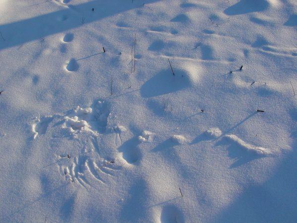 snow story (1)