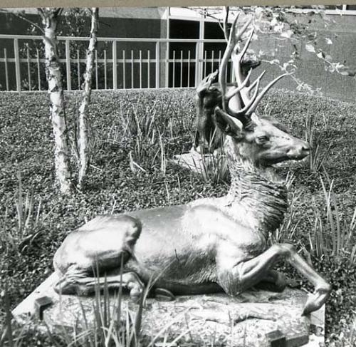 Another Hyatt Huntington stag on display in Houston, Texas.