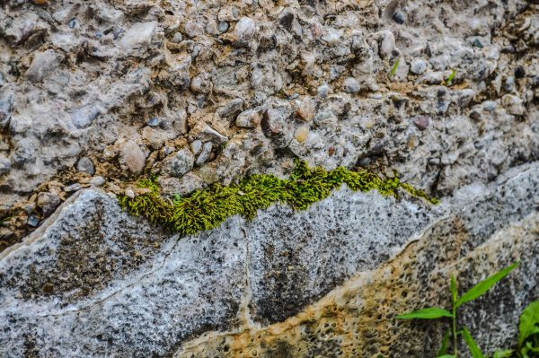 Members of the Arts Commission have conducted tests to see if the moss would stick to the overlook's concrete surface.