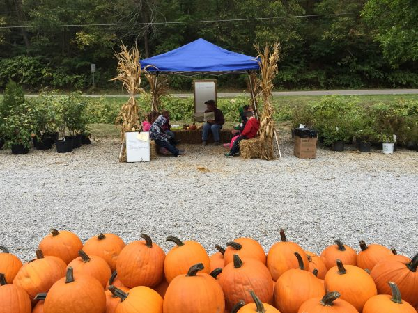Nicky's carries several different varieties and sizes of pumpkins and gourds and offers many fun activities for kids, including a corn maze and hay bale slide.
