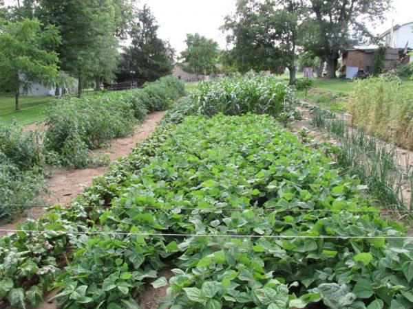 Garden on 7-14-16