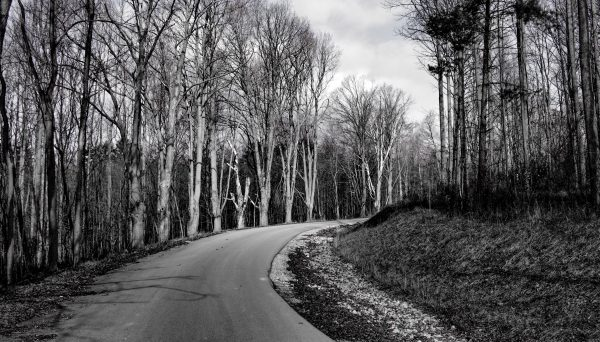 The aligned trees spooked visitors as soon as they started up County Farm Road.