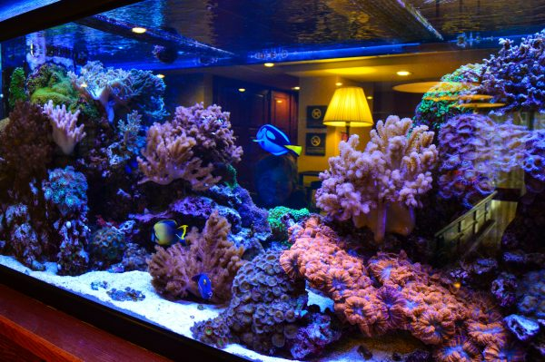 This saltwater aquarium is located inside the lobby of the Hampton Inn Wheeling.