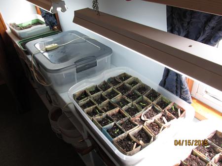 Indoor Growing Area