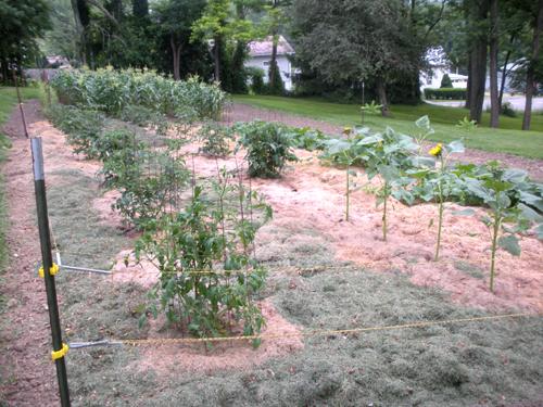 Garden Mulched 2013