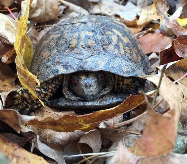 Turtle Smaller