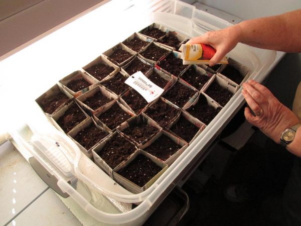 Germination photo