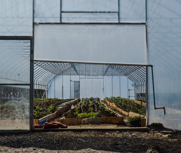 The greenhouses are sheltered from rain and snow but are open-air, as well.