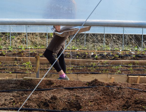 Carlson, seen her adding organic fertilizer to the greenhouse growth, farms all of Grow Ohio Valley's East Wheeling locations.