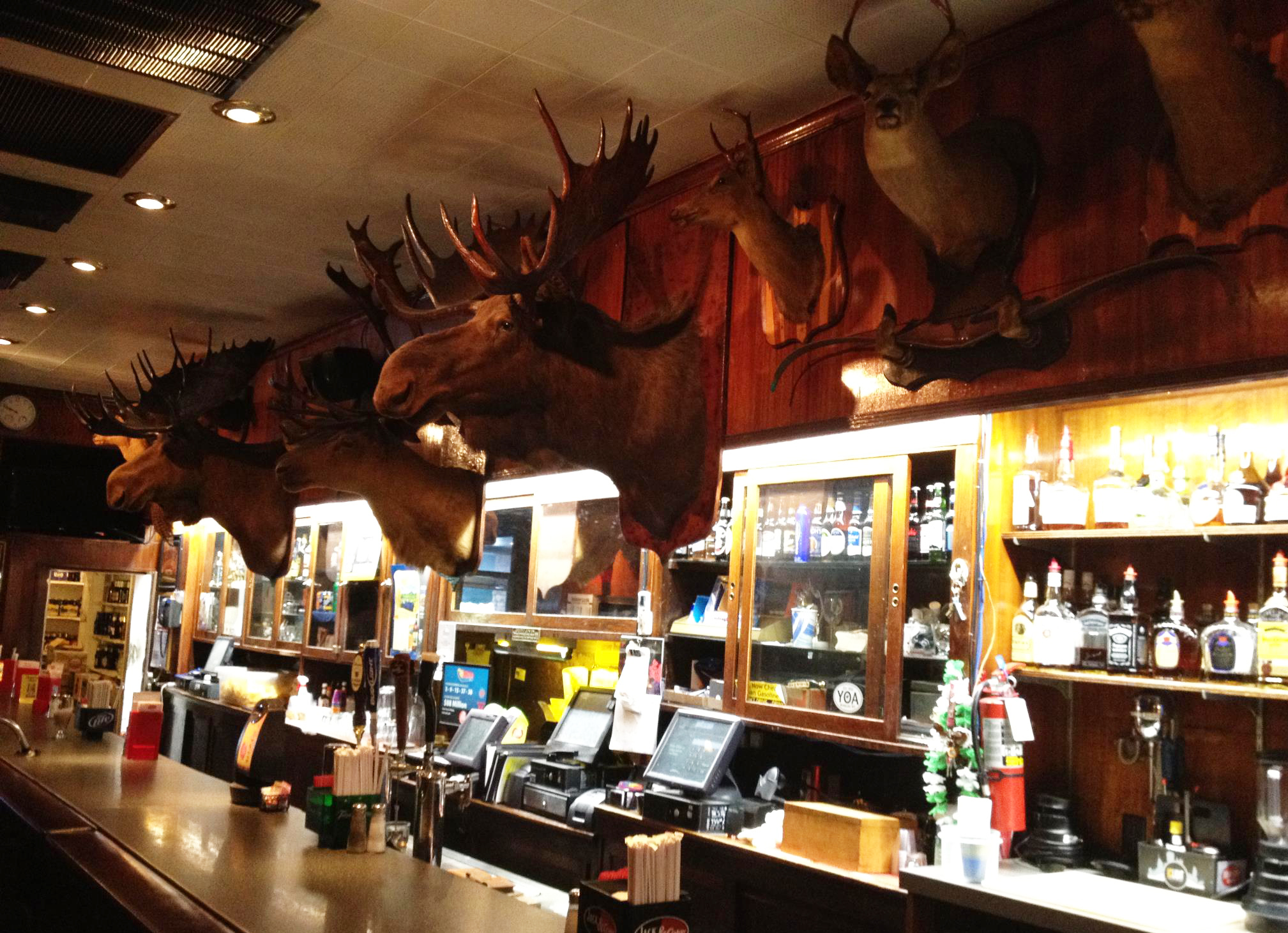 Moose Heads at Alpha